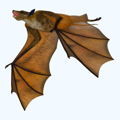 Icaronycteris Bat on White - Icaronycteris index is the first bat known to science and lived in North America in the Eocene Period.