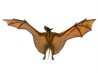 Icaronycteris Bat Wings - Icaronycteris index is the first bat known to science and lived in North America in the Eocene Period.