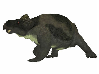 Kannemeyeria Dinosaur Side Profile - Kannemeyeria was a herbivorous dicynodont dinosaur the lived in South Africa, Argentina, India and China during the Triassic Period.