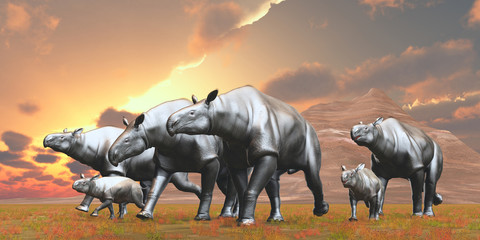 Paraceratherium Herd - Paraceratherium was an Indricotherium herbivore that lived in Eurasia during the Eocene Period.