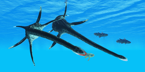 Styxosaurus Reptile hunts Coelacanth Fish - An unlucky Coelacanth fish becomes prey to a marine reptile called Styxosaurus during the Cretaceous Period of North America.