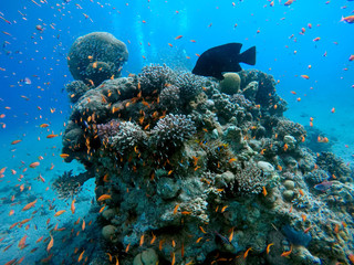 Coral reef in the Red Sea next to Eilat