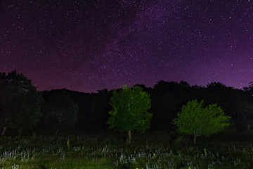 Starry sky over the forest