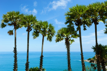 Row of Palm trees in tropical island with clear blue sky scenery background.