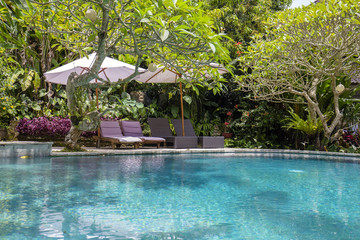 Swimming pool, blue water, green leaves of trees and deck chairs in tropical garden. Bali, Ubud, Indonesia