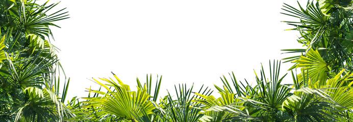 rahmen aus üppigen palmenblättern