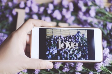 "Hand holding Smartphone and Wooden letters word ""LOVE"" on Purple Marguerite daisy flowers background.Use for Valentine day and vintage style and ultra violet for 2018 concept background."