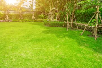 Fototapeta Green lawn, The front lawn for background, Garden landscape design