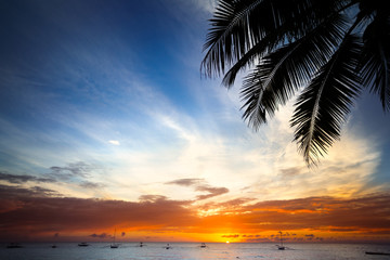 beach background at sunset with palm tree