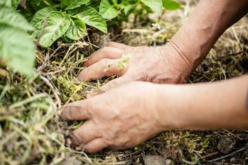 畑仕事をする働き者の手