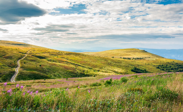 hills of Runa mountain in late summer. lovely landscape with fire weed flowers in front and forest in the distance. road passes the slope