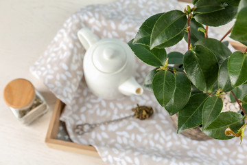 Tea shrub near ceramic pot on tray, top view