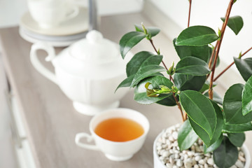 Tea plant with green leaves and hot drink on table