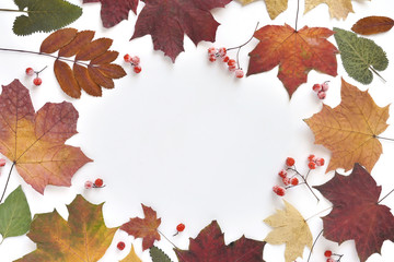 Autumn concept background of dry maple  colorful  leaves on a white, top view, flat lay.