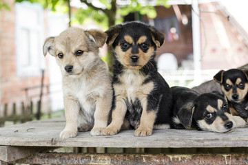 Photo portrait of dog family outdoors, group of small puppies with green summer background