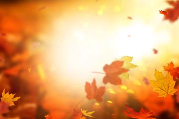 Herbsthintergrund leaf