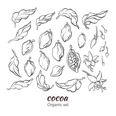 Vector set of cocoa tree branch