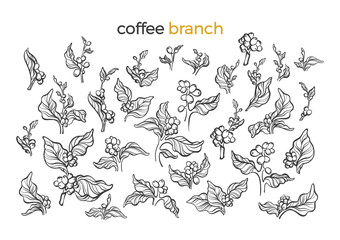Set of coffee tree. Vector art line illustration
