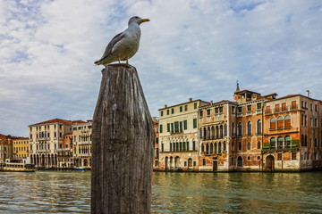 Venice, Italy, Grand canal view with seagull