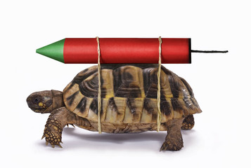 Photo sur Plexiglas Tortue Velocidad a la tortuga con el cohete