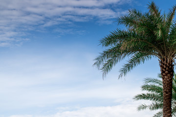 A palm tree with blue sky background and advertising space