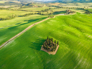 Group of italian cypresses near San Quirico d´Orcia - called Cipressi di San Quirico d'Orcia - aerial view - Val d'Orcia, Tuscany, Italy