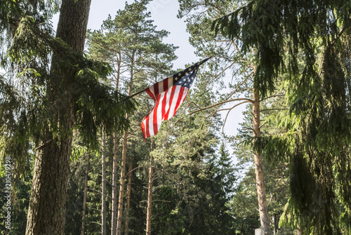 American flag is attached to a tree, the USA flag is set in a pine forest, a sunny day with a blue sky