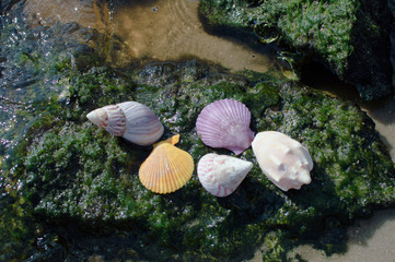 Shells on green rocks beach