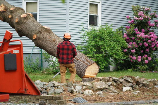manual worker removing tree in residential area
