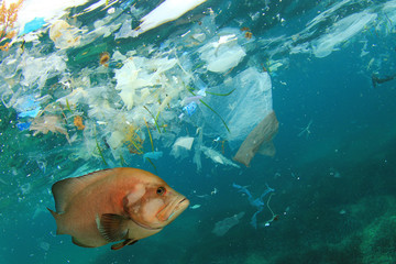Fish and plastic pollution in sea. Microplastics contaminate seafood.
