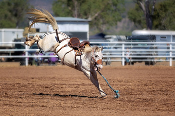 White Bucking Horse At Rodeo