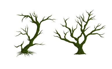 Vector  trees  on white background. illustration.