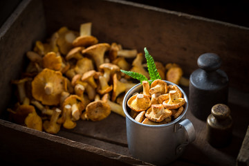 Healthy chanterelles straight from the forest in wooden box