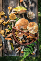 Top view of noble mushrooms on old wooden rustic table
