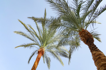 green palm tree leaves against the sky