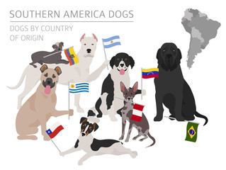 Dogs by country of origin. Latin american dog breeds. Infographic template