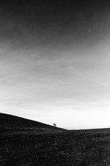 A distant, lonely tree on a bare hill, beneath a big sky with white clouds