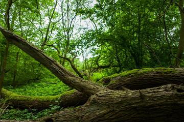 The Altengroden park in Wilhelmshaven, Germany.