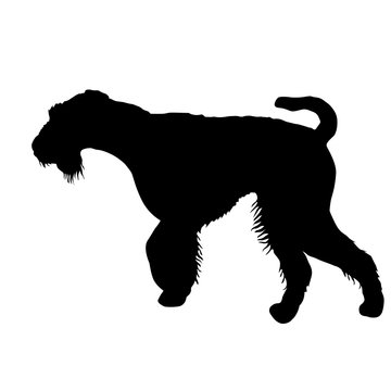 Airedale terrier dog silhouette on a white background