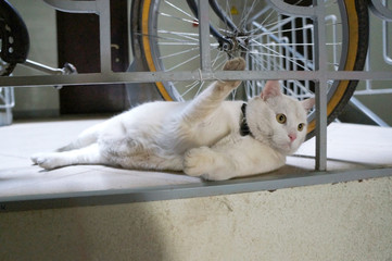 White cat near bicycle.