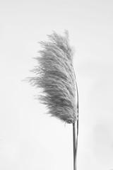 A plant in black+white