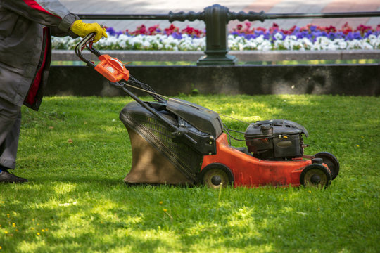 A worker shearing a lawn with a lawn mower
