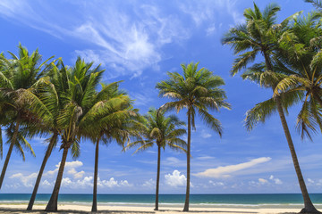 Coconut Trees On The White Beach.