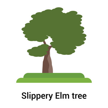 Slippery Elm tree icon vector sign and symbol isolated on white background, Slippery Elm tree logo concept