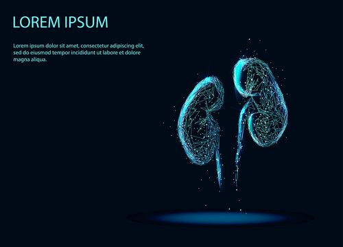 Abstract image of a Human Kidney internal organ