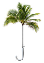 Coconut tree natural umbrella
