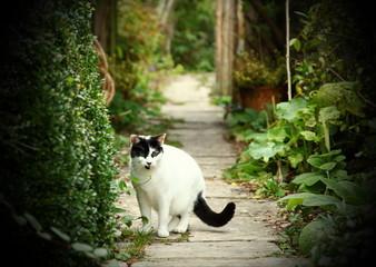 Cat portrait in the garden scene.