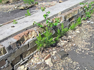 green tree grass and vintage destroyed  brick stone, vintage construction, stress environment diversity
