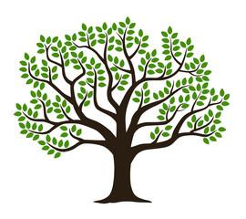 緑葉の木|シルエット