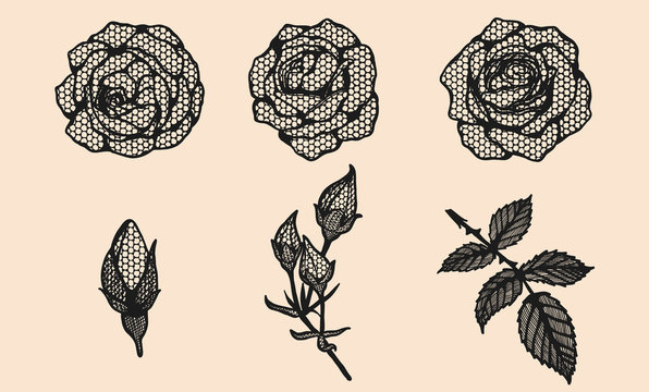 Rose vector lace by hand drawing.Beautiful flower on brown background.Rose lace art highly detailed in line art style.Flower tattoo on vintage paper.
